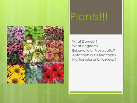 Plants!!! What Domain? What kingdom? Eukaryotic or Prokaryotic? Autotroph or Heterotroph? Multicellular or Unicellular?