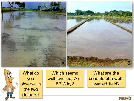 What do you observe in the two pictures? AB Which seems well-levelled, A or B? Why? What are the benefits of a well- levelled field?