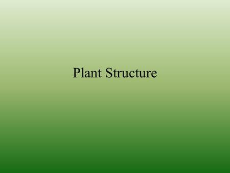 Plant Structure. Plant Tissues A tissue is a group of cells organized to form a functional unit or a structural unit Plants have 3 tissue systems: –Ground.