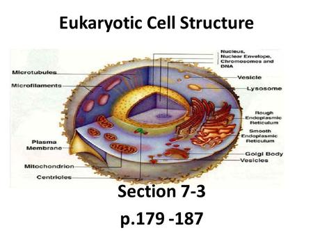 Eukaryotic Cell Structure Section 7-3 p.179 -187.