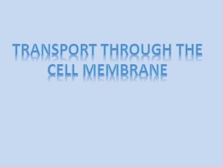 Transport through the cell membrane either by diffusion or active transport.