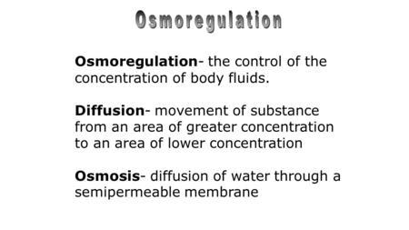 osmoregulation in fish essay