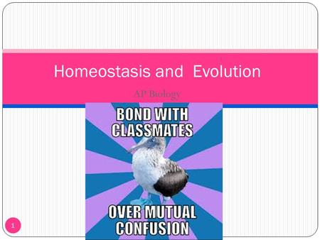 AP Biology 1 Homeostasis and Evolution. Homeostasis 2 Homeostasis is the way an organism maintains a stable internal environment within itself Body systems.