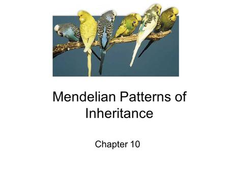 Mendelian Patterns of Inheritance Chapter 10. Inheritance 23 pairs of chromosomes 46 total.