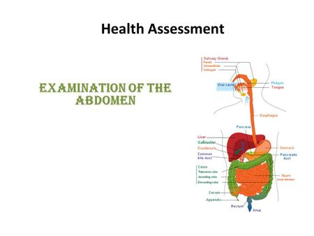 Health Assessment Examination of the Abdomen. Introduction: The anatomy and physiology review of the abdomen has a two- point focus: – The primary focus: