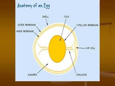 Eggs. Egg Nutrition Eggs contain protein. Egg whites are called: albumin (100% protein) Eggs contain protein. Egg whites are called: albumin (100% protein)