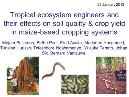 Tropical ecosystem engineers and their effects on soil quality & crop yield in maize-based cropping systems Mirjam Pulleman, Birthe Paul, Fred Ayuke, Marianne.