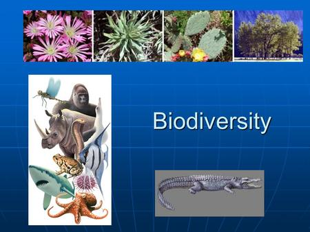Biodiversity. Estimate over 1.5 million species Estimate over 1.5 million species Biodiversity is the number of different species in an area. Biodiversity.
