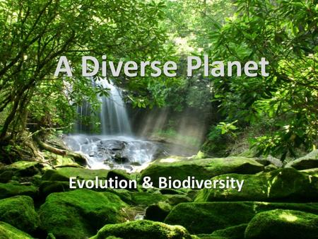 A Diverse Planet Evolution & Biodiversity. Home of the Diverse Ecosystem Diversity – Different ecosystems within a region Species Diversity – Variety.