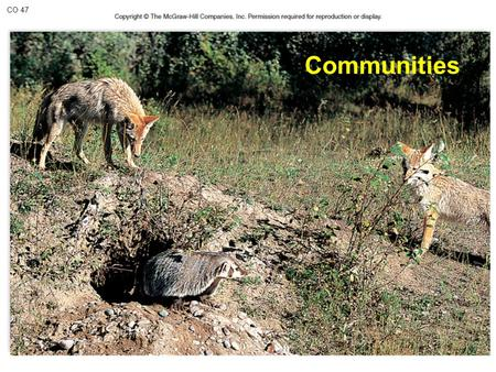 CO 47 Communities. Concept of the Community Community = assemblage of populations interacting with one another Example: squirrel, moose, bear, fox, wolf,