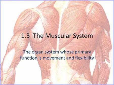 1.3 The Muscular System The organ system whose primary function is movement and flexibility.