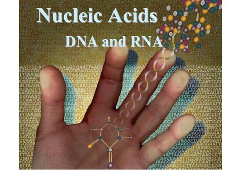 Nucleic Acids DNA and RNA Hundreds of thousands of proteins exist inside each one of us to help carry out our daily functions. These proteins are produced.