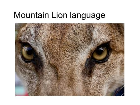 Mountain Lion language. Signs and level of Danger All the information for this came from the South Dakota Game and Fish website. This site is designed.