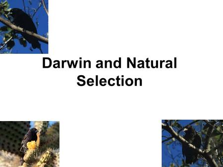 Darwin and Natural Selection 1. Charles Darwin Darwin explored Galapagos islands from April through October 1835. –Entire voyage of The Beagle: Dec 1831.