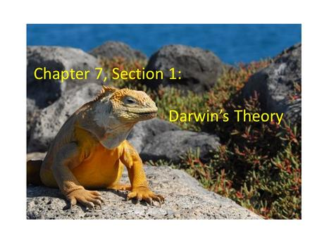 Chapter 7, Section 1: Darwin's Theory. Charles Darwin A naturalist Studied plants and animals Traveled on a ship called the Beagle in the southern hemisphere.