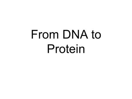 From DNA to Protein. Proteins Proteins are complex 3D structures that play a key role in cell function. All controlling enzymes are made out of protein.