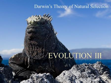 Darwin's Theory of Natural Selection. POINT > Review the ideas that shaped Darwin's thinking POINT > Describe postulates that underlie natural selection.