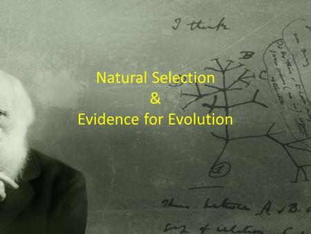 Natural Selection & Evidence for Evolution. Objectives SUMMARIZE Darwin's theory of natural selection EXPLAIN how the structural and physiological adaptations.