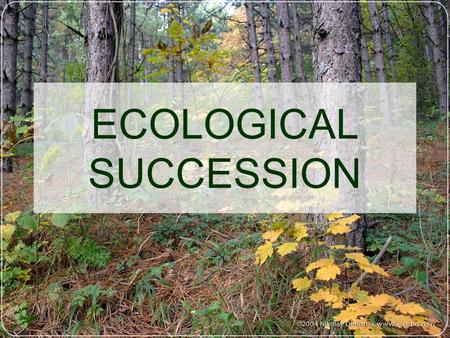 ECOLOGICAL SUCCESSION. Ecological Succession: Succession: Series of environmental changes that occur in a predictable way.