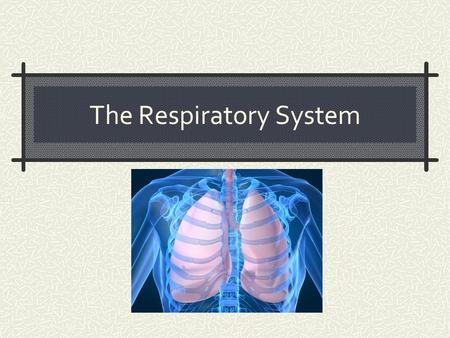 The Respiratory System. LUNG CAKE Functions of the Respiratory System Obtain O 2 from environment Expel CO 2 into the environment Filter foreign particle.