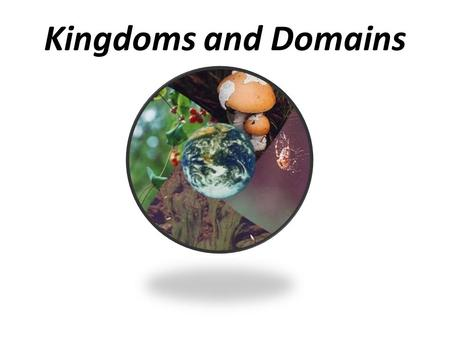 Kingdoms and Domains.