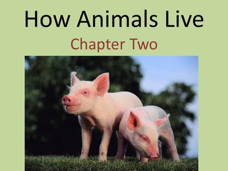 How Animals Live Chapter Two. What All Animals Need water food oxygen shelter.