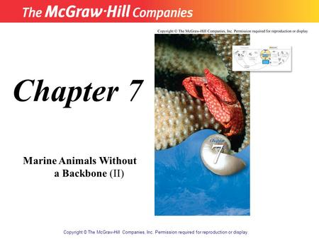 Copyright © The McGraw-Hill Companies, Inc. Permission required for reproduction or display. Chapter 7 Marine Animals Without a Backbone (II)