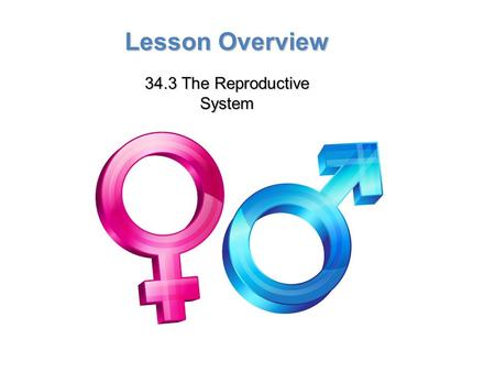 Lesson Overview Lesson Overview The Reproductive System Lesson Overview 34.3 The Reproductive System.