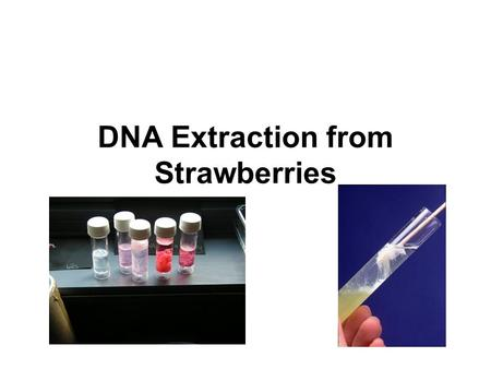 DNA Extraction from Strawberries. Lab Safety and Tips Wear Goggles Important to have clean glassware. Follow directions CAREFULLY or you will not get.