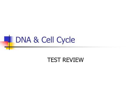 DNA & Cell Cycle TEST REVIEW. The time when a cell is eating, breathing, growing… Interphase.