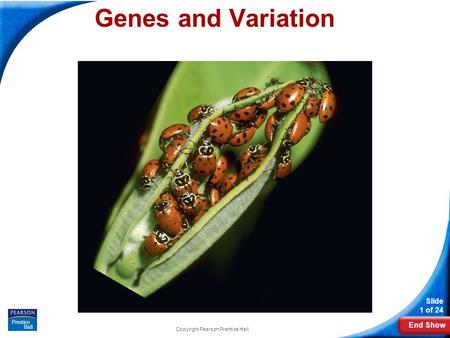 End Show Slide 1 of 24 Copyright Pearson Prentice Hall 16-1 Genes and Variation Genes and Variation.