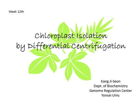 Chloroplast Isolation by Differential Centrifugation Week 12th Kang Ji-Seon Dept. of Biochemistry Genome Regulation Center Yonsei Univ.