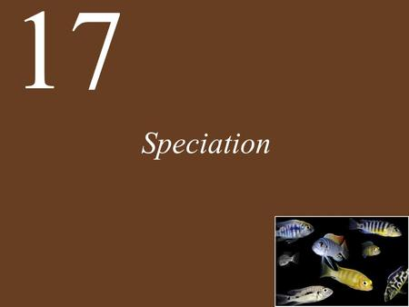 Speciation 17. Chapter 17 Speciation Key Concepts 17.1 Species Are Reproductively Isolated Lineages on the Tree of Life 17.2 Speciation Is a Natural Consequence.