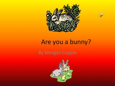 Are you a bunny? By Morgan Copple Appearance If you are a bunny you would be black, brown, white or a mixture. You are 24 inches and weigh 12 pounds.