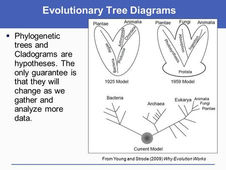  Phylogenetic trees and Cladograms are hypotheses. The only guarantee is that they will change as we gather and analyze more data. From Young and Strode.