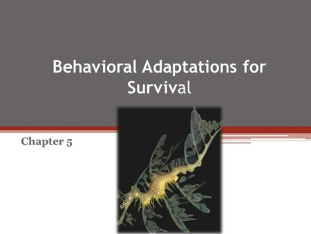 Behavioral Adaptations for Survival Chapter 5. Adaptationist Approach – Assumes a behavior is adaptive (trait confers greater reproductive success than.