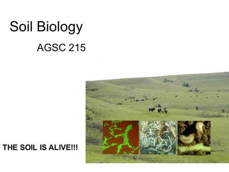 Soil Biology AGSC 215 THE SOIL IS ALIVE!!!. What is Soil Biology? Study of microbial and faunal activity and ecology in soil. These organisms include.