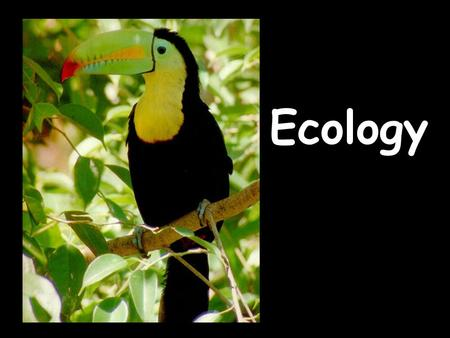 Ecology. Ecology: AbioticBiotic: Levels of Organization Habitat Niche Capacity Competition Feeding Relationships Symbiotic Relationships Trophic Levels.