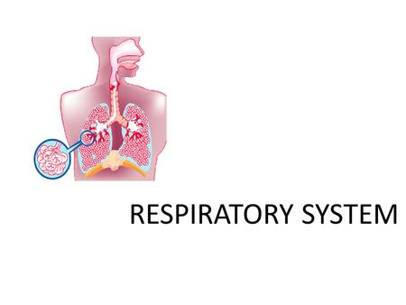 RESPIRATORY SYSTEM. Function Exchange of O 2 and CO 2 to ensure the survival of each cell Why do we need Oxygen? For the combustion of nutrients so that.