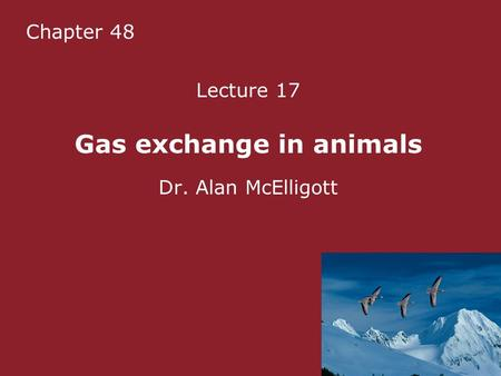Chapter 48 Lecture 17 Gas exchange in animals Dr. Alan McElligott.