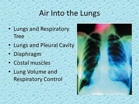 Air Into the Lungs Lungs and Respiratory Tree Lungs and Pleural Cavity Diaphragm Costal muscles Lung Volume and Respiratory Control.