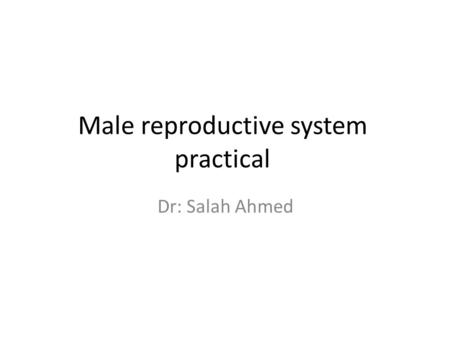 Male reproductive system practical Dr: Salah Ahmed.