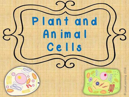 Plants and Animals Plants and animals are made up of millions and millions of tiny parts called cells © LoveLearning 2014.