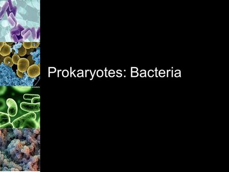 Prokaryotes: Bacteria. Bacteria Found on almost every square cm of Earth Bacteria = prokaryotes –Remember: no nucleus and no membrane bound organelles.