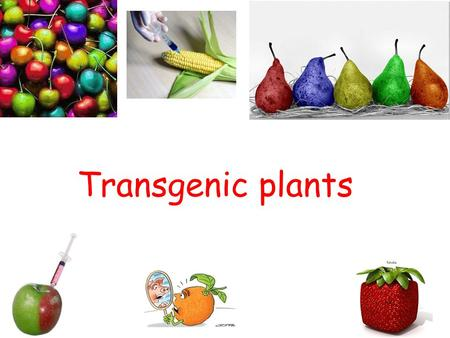 Transgenic plants. All stable transformation methods consist of three steps: Delivery of DNA into a single plant cell. Integration of the DNA into the.