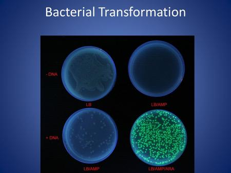 Bacterial Transformation. Genetic Engineering: Any manipulation of genetic material within a cell or organism. Transformation: Splicing gene(s) from one.