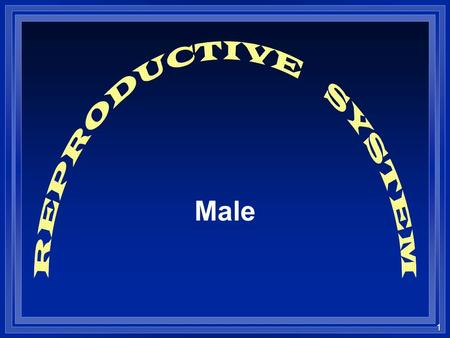 1 Male. 2 l The mechanism that maintains life from one generation to the next The Reproductive System.