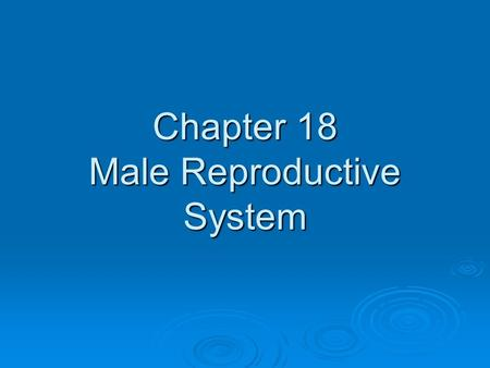 Chapter 18 Male Reproductive System. Functions of the Male Reproductive System 1. Produce and Store Sperm 2. Produce male sex hormone testosterone.