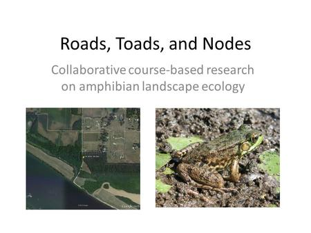 Roads, Toads, and Nodes Collaborative course-based research on amphibian landscape ecology.