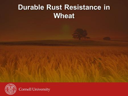Durable Rust Resistance in Wheat. Introduction to the project July 29, 2008 Rick Ward, Project Coordinator, Cornell University Farmer in Narok, Kenya,
